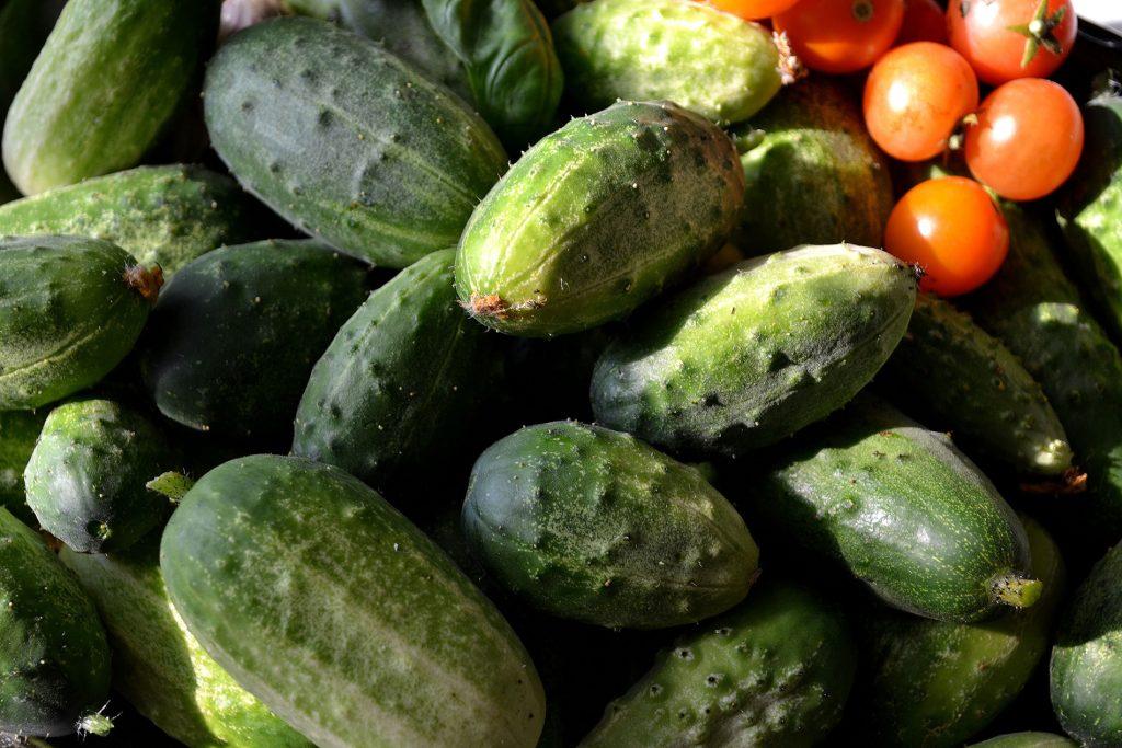 Egenodlade gurkor och tomater.